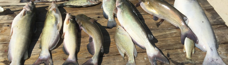 Cypress Landing RV Park-Fish cleaning